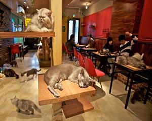 Кафенета с котки