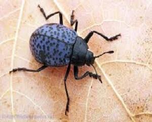 Уникална бизнес идея - представления с насекоми