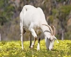 Бизнес с  кози – по-просто отколкото мислиш!