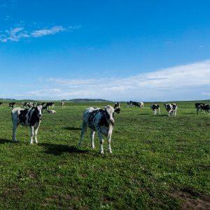 Търси се начин за подпомагане на животновъдния сектор